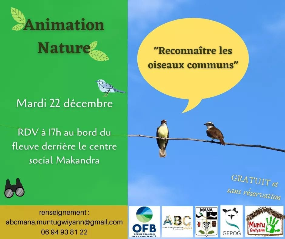 Animation NAture MAna