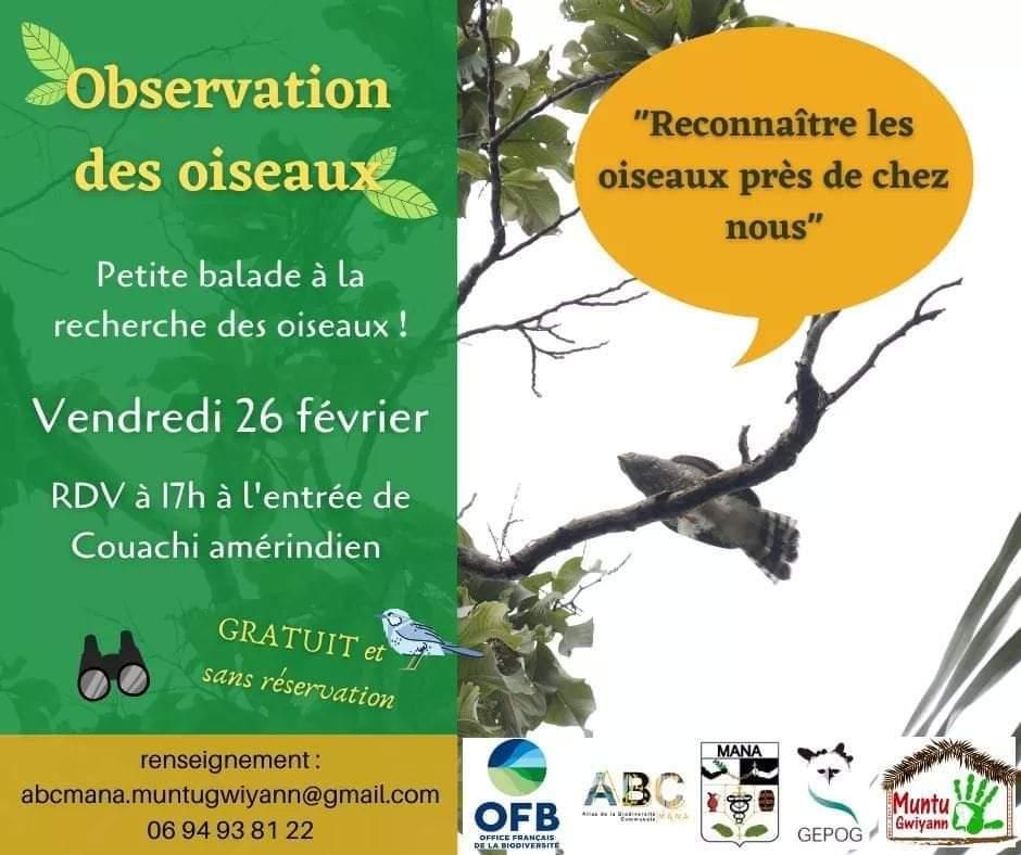 Mana-Observatoire-des-oiseaux